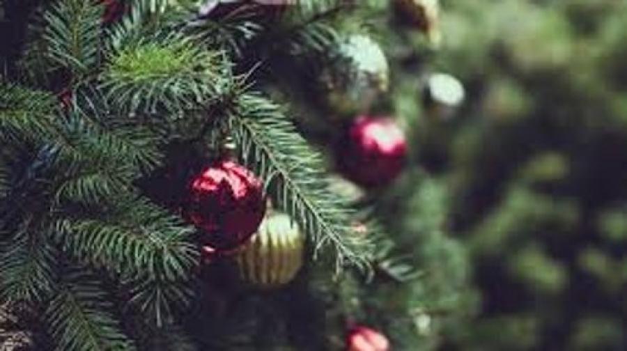 Albero Di Natale Vero Come Farlo Sopravvivere.Albero Di Natale Vero Scopri Come Curarlo Per Mantenerlo Vivo A Lungo Bocasa